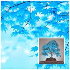 300 Bonsai Blue <b>Maple Tree</b> Bonsai Trees Green <b>Artificial Plants</b> ...