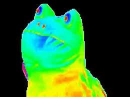 Rainbow frog gif - YouTube via Relatably.com