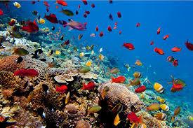 Mewujudkan Liburan Eksotis Pulau Lembongan Bersama Vitalis