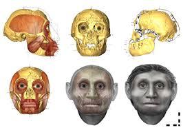 Resultado de imagem para IMAGENS DOS HOMENS E MULHERES CARNÍVOROS OU HERBIVOROS