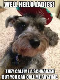 I <3 My Schnauzer on Pinterest | Schnauzers, Miniature Schnauzer ... via Relatably.com