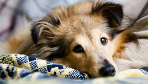 10 Simple Tips for Cleaning Up Dog <b>Hair</b> - Puppy Leaks