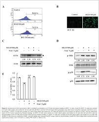 diabetic retinopathy methylglyoxal activating transcription biochemistry pharmacology involvement ros generation mgo mediated up