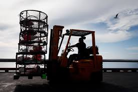 Dungeness crab commercial season cleared to start next week