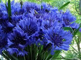 Елена <b>Жилинская</b>   Все синее - синее   Цветы, Синий и Растения