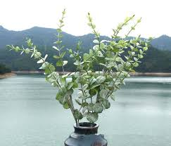2pcslot home hotel office decoration good quality artificial plants flowers spray the powder money artificial plants for office decor