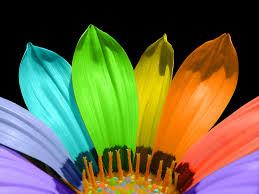 வால்பேப்பர்கள் ( flowers wallpapers ) - Page 6 Images?q=tbn:ANd9GcRitIvaS8Uf9unTQNaFKlVyDqkmKdgn4RWM0RcIbvX-dsUkiKLy