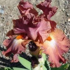 La Collina delle Iris - Home | Facebook