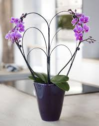 day orchid decor: view in gallery phalaenopsis mug view in gallery