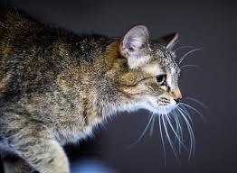 <b>Cute adorable cat</b> стоковое фото. изображение насчитывающей ...