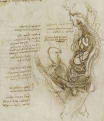 leonardo da vinci and the origin of semen notes and records figure · open in new tab · powerpoint figure 1 leonardo da vinci s
