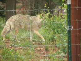 Hi there cutie. - Picture of Colorado Wolf and Wildlife Center, Divide ...