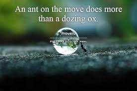Ant Quotes. QuotesGram