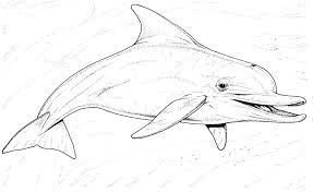 Small Picture Pics Of Dolphin And Hearts Coloring Pages How To Draw Dolphins