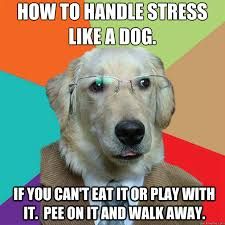 How-To-Handle-Stress-Like-A-Dog.jpg via Relatably.com