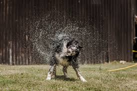 Tips for keeping dogs <b>cool</b> in <b>summer</b> | Blue Cross