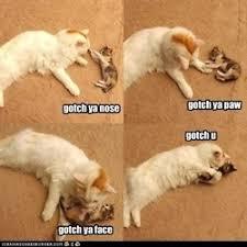 cat meme • via Relatably.com