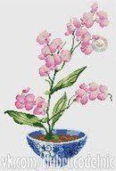 Pin by Nilmani Ekka on Orchid, daffodils, <b>gladiolus</b> | Daffodils ...