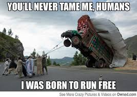 I sha'll never be tamed puny humans! | Pictures | Owned.com via Relatably.com