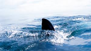 <b>Shark</b> Sightings Cape Cod 2020: Nearly 300 Spotted Off New ...