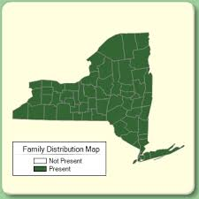 Fagaceae - Family Page - NYFA: New York Flora Atlas - NYFA: New ...