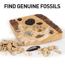 Fossils Excavate 15 real fossils including <b>Dinosaur</b> Bones Mosasaur ...