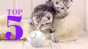 The 5 Best <b>Electronic Cat Toys</b> To Buy In 2020 - YouTube