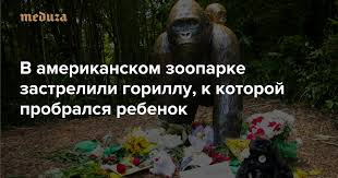 Жертва интереса к людям В американском зоопарке застрелили ...