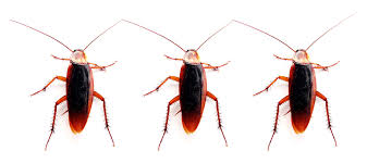 Image result for cockroaches animations