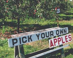 Image result for pick your own
