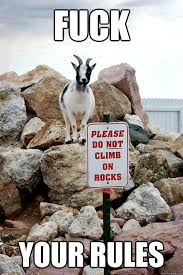 Rebellious Billy Goat memes | quickmeme via Relatably.com