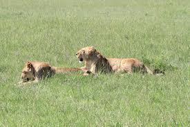 hunting elephants essay hunting debate essay images guru images guru