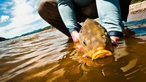 Risultati immagini per carp-fishing