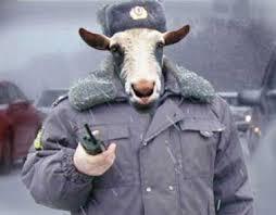 """""""Беркут"""" сменил тактику: теперь бойцы передвигаются на автобусах без номерных знаков - Цензор.НЕТ 8533"""