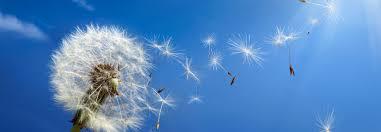 Resultado de imagen de pluma en el aire