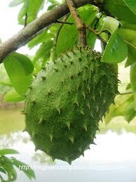 Image result for manfaat buah sirsak