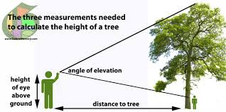 how to calculate tree height using a smartphone gabriel hemery how to calculate tree height