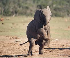 Image result for elephants jumping
