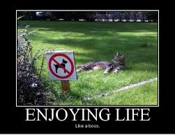 FunnyMemes.com • Funny memes - [Enjoying life] via Relatably.com