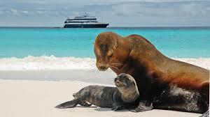 Resultado de imagen para islas galapagos cruise