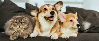 Узнайте — 5 средств от <b>запахов</b> животных в доме или квартире ...