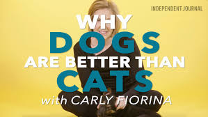 why dogs are better pets than cats persuasive essay  why dogs are better pets than cats persuasive essay