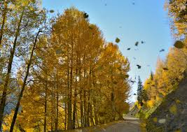 Image result for falling leaves