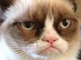 JimmyFungus.com: The Best of Grumpy Cat: The Best Grumpy Cat Memes ... via Relatably.com