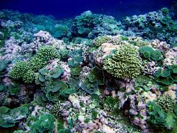 synthetic biology applications and ethics marine science today reef in american samoa