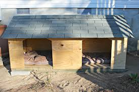 Droolworthy DIY Dog House Plans   Healthy PawsDIY double dog house for large dogs