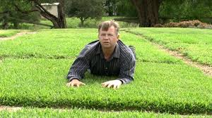 Choosing The Right Turf For Your Situation In Australia - YouTube