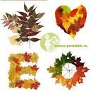 Чем крепить листья в поделках