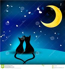 Image result for images of cats in love