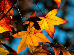 Image result for images falling leaves